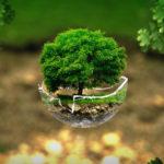 Planter des arbres, une solution simple pour préserver l'environnement