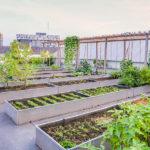 Comment mettre en place un jardin potager sur le toit?